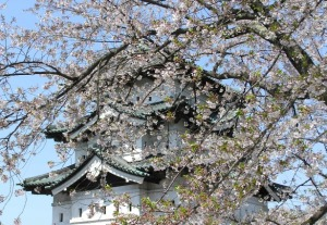 The fortress at Hirosaki has over 3000 cherry trees