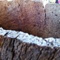 mature ring of oldcork.