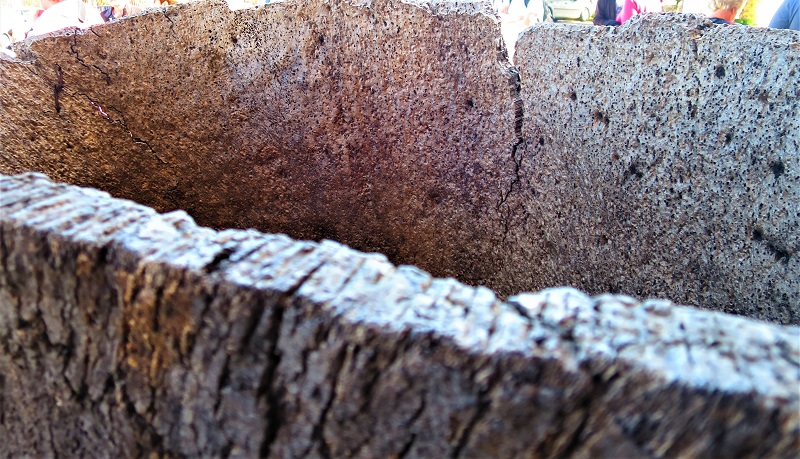 mature ring of old cork.
